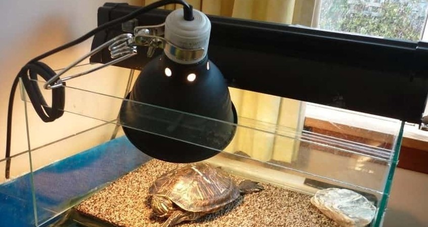 How Long can Turtles live without a heat lamp?