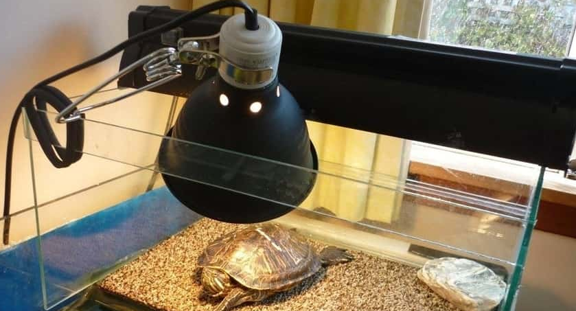 Can I use a regular light bulb for my turtle