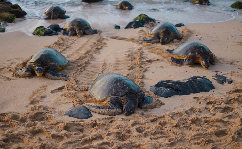 How Do Sea Turtles Sleep