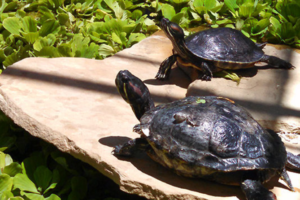 How to Make a Floating Turtle Dock