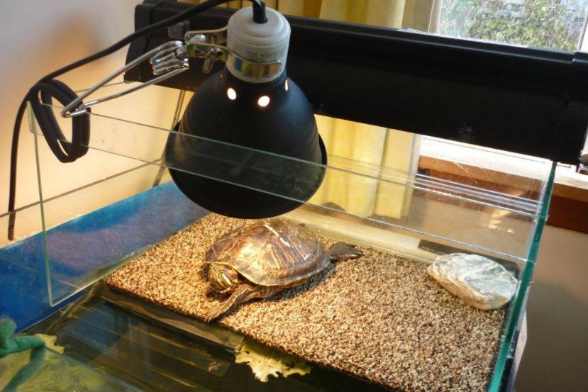 Do Turtles Need Light at Night