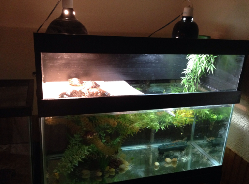 How to Setup the Lights for a Turtle Tank