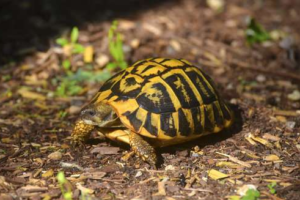 Types of Turtles That Make Great Pets