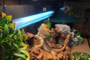What Are Reptile UV Lights
